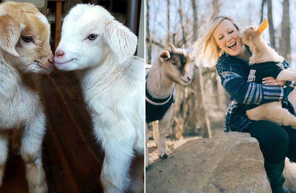 Traum wird Wirklichkeit: Sie kündigt ihren Büro-Job, um sich um kuschelige Baby-Ziegen zu kümmern