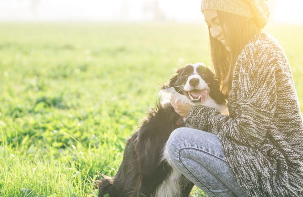 30 imágenes de perros ya adultos siendo adoptados que encogerán tu corazón