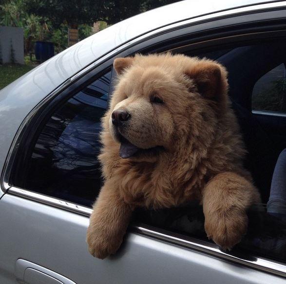 Achtung Das Ist Kein Teddybär Sonder Der Wohl Süßeste Hund Der Welt