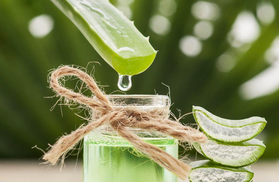 Aloe vera: proprietà, benefici e controindicazioni della pianta curativa