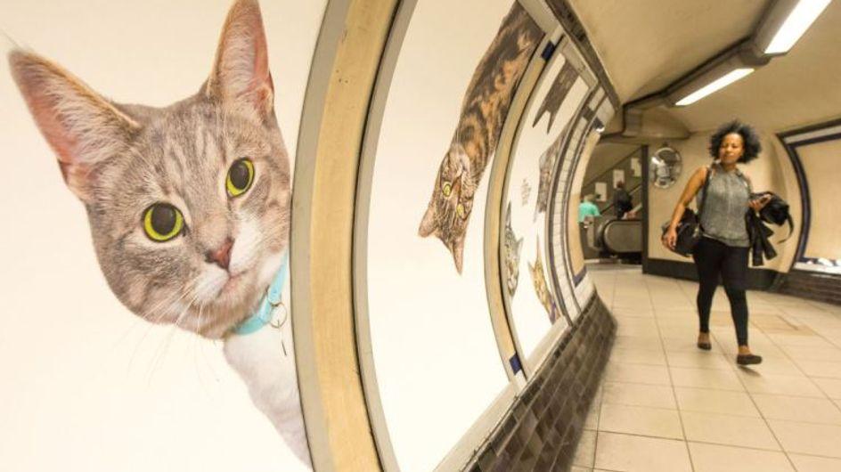 Miau! In dieser U-Bahn-Station wurden alle Werbeplakate durch niedliche Katzenbilder ersetzt