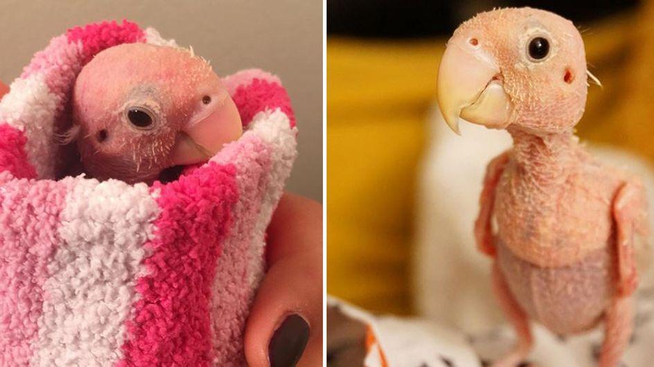 Zuckersüß! Dieser kleine, federlose Vogel lässt sich von seiner Krankheit nicht unterkriegen