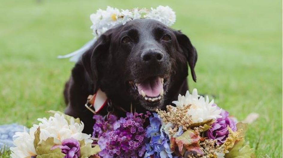 Dieser todkranke Hund lebte noch lange genug, um die Hochzeit seines Frauchens mitzuerleben