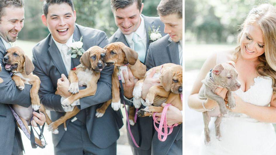 Blumen kann ja jeder: Dieses Paar hatte für seine Hochzeitsfotos die niedlichste Idee