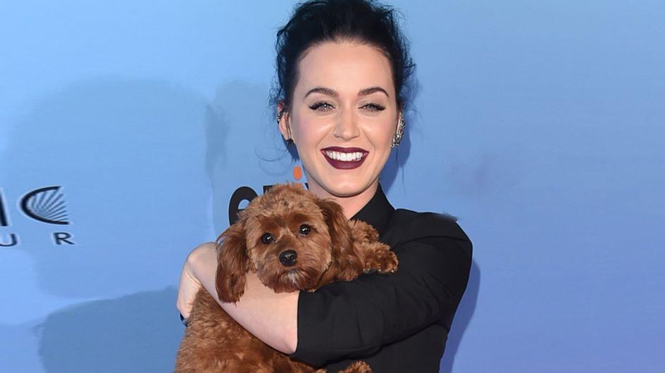 ¡Animales a raudales! Así pasean las celebrities a sus mascotas