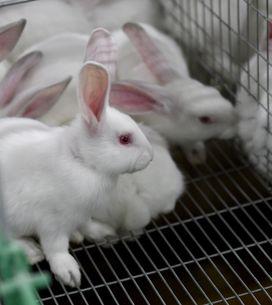 Victoire ! Les tests de cosmétiques sur les animaux c'est fini (Photos)
