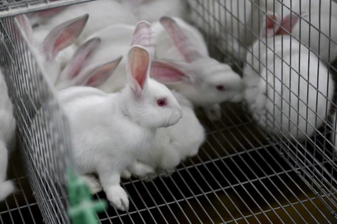 L'Union Européenne ne testera plus de produits de cosmétiques sur les animaux