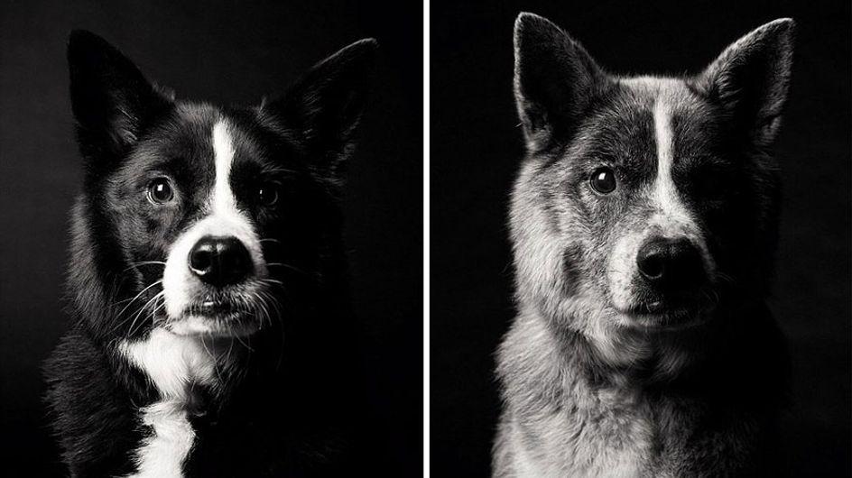Antes y después: 20 imágenes que reflejan el paso de los años en los perros