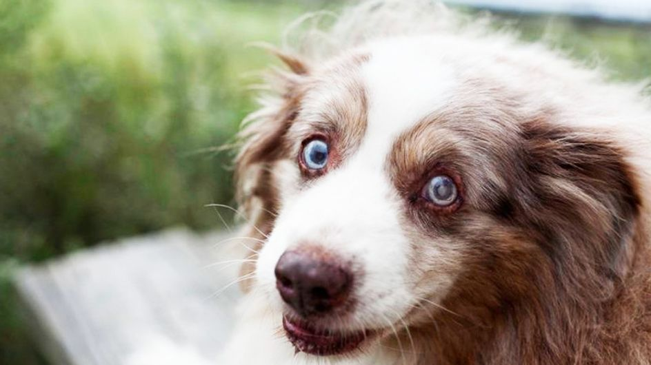 Emocionantes fotografías para homenajear la vida de perros ancianos
