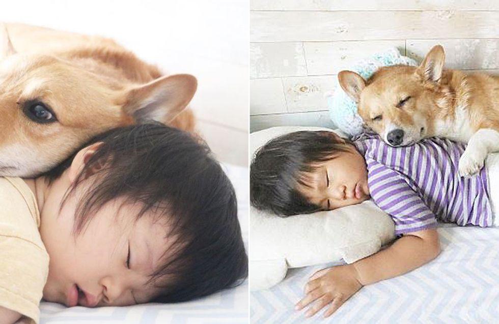 Tierisch beste Freunde: Für diesen 2-Jährigen ist ein Leben ohne seinen Vierbeiner unvorstellbar