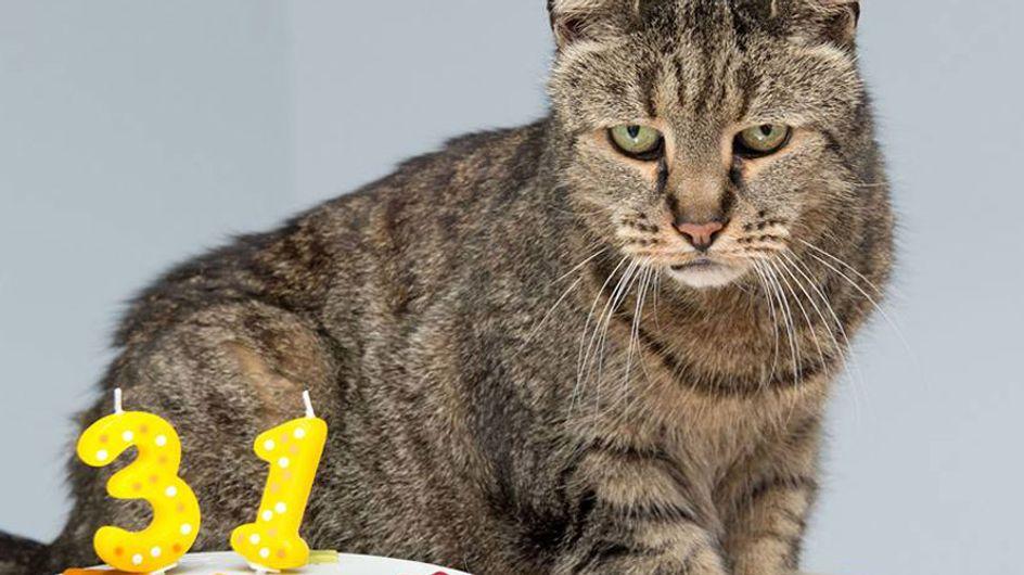 Die älteste Katze der Welt: 'Nutmeg' feiert seinen 31. Geburtstag