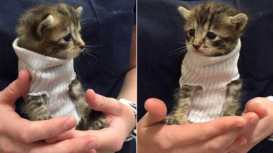 Dieses winzige Kätzchen im Pullover ist genau das, was wir heute brauchen ❤