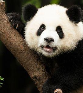 ¡Bendita naturaleza! Los 20 animales más bonitos del mundo