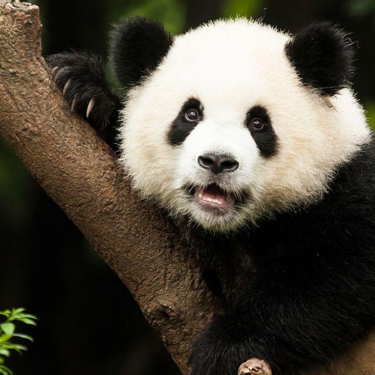 Los 20 Animales Más Bonitos Del Mundo