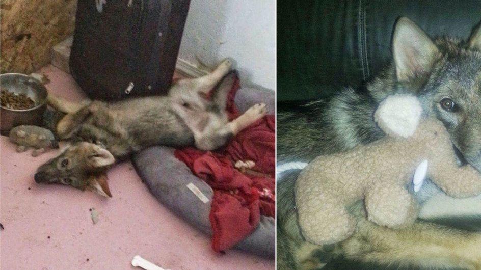 """Was hinter diesem adoptierten """"Hund"""" wirklich steckt, schockiert seinen Besitzer"""