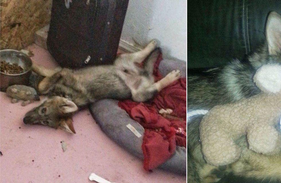 Was hinter diesem adoptierten Hund wirklich steckt, schockiert seinen Besitzer