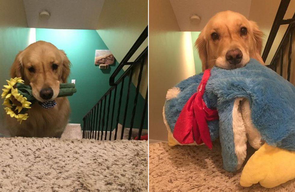 So putzig! Therapiehund Mojito geht nicht ohne seine geliebten Kuscheltiere schlafen