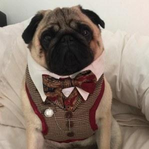 Un chien habillé sur internet