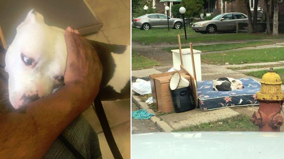 Einfach mit dem Müll zurück gelassen: Dieser Hund wartete einen Monat lang auf seine Familie
