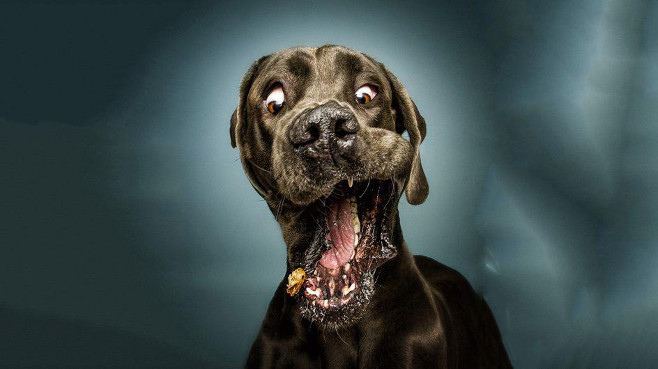 Las hilarantes expresiones de nuestras mascotas captadas con todo lujo de detalles