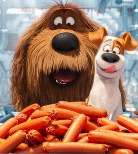 7 cosas que solo entenderás si eres una amante de los perros