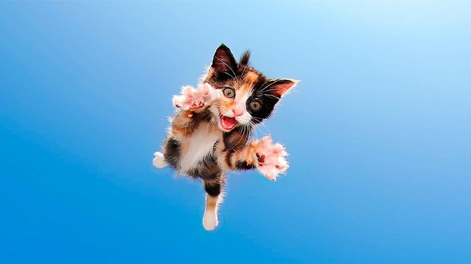 Fotos: gatinhos prontos para atacar!