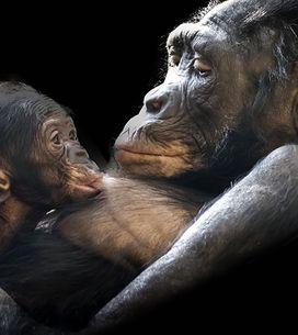Amor de madre: 16 adorables pequeños junto a sus mamás