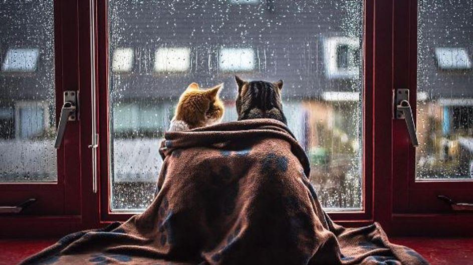 Was für ein Katzenleben: SO wollen wir auch nasskalte Herbsttag verbringen