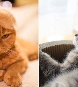 Deine Katze haart zu viel? Dieser schräge Trend könnte die perfekte Lösung sein!