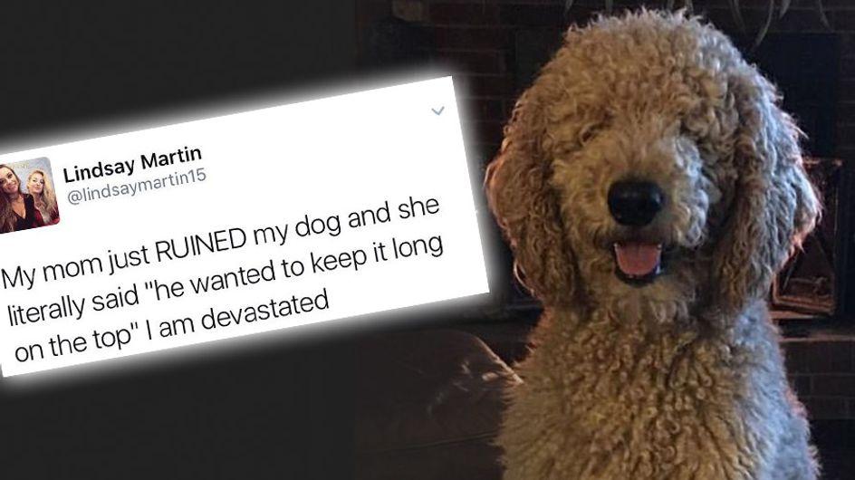 """""""Meine Mutter hat meinen Hund kaputt gemacht!"""" - Ihre Reaktion auf die neue Frisur ihres Hundes ist Gold wert"""