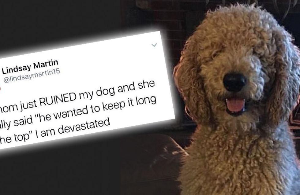 Meine Mutter hat meinen Hund kaputt gemacht! - Ihre Reaktion auf die neue Frisur ihres Hundes ist Gold wert