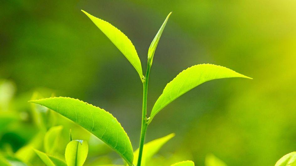 Colore dell'anno 2017: è il verde Greenery lanciato da Pantone