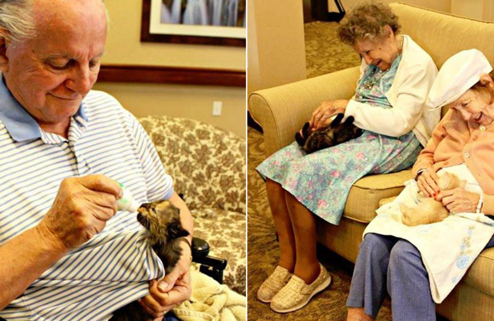 Etwas für Herz und Seele: Diese Alzheimer-Patienten päppeln verstoßene Babykatzen auf ❤