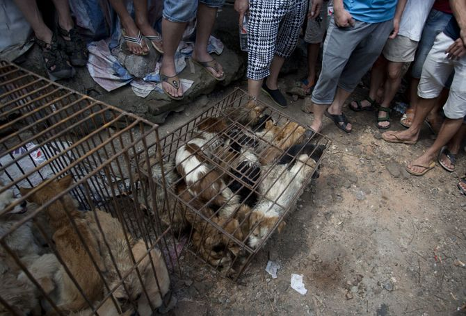 Un marché de viande de chien en Chine