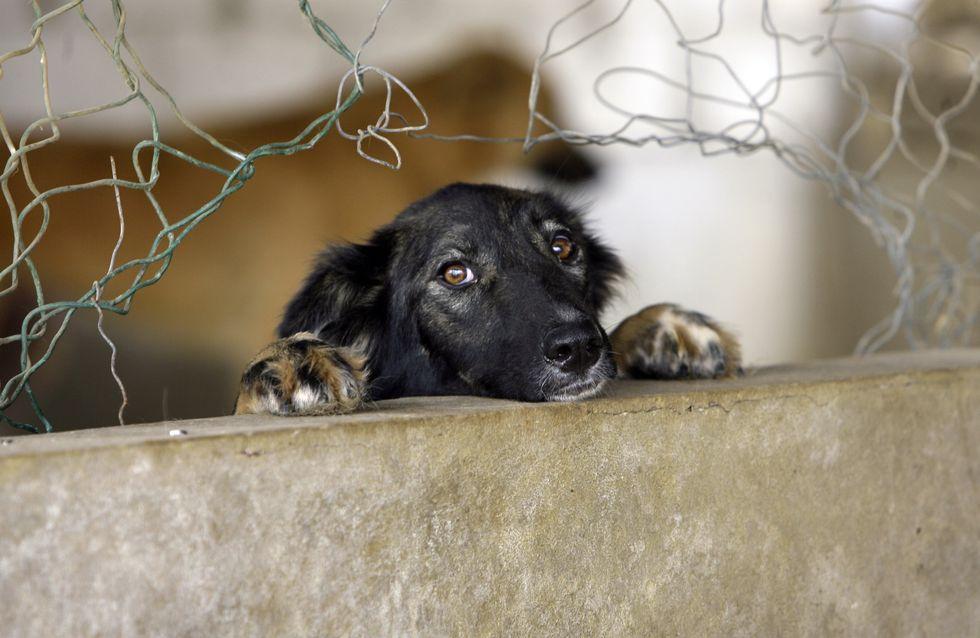 En Corée du Sud, le plus grand marché de viande de chien ferme enfin
