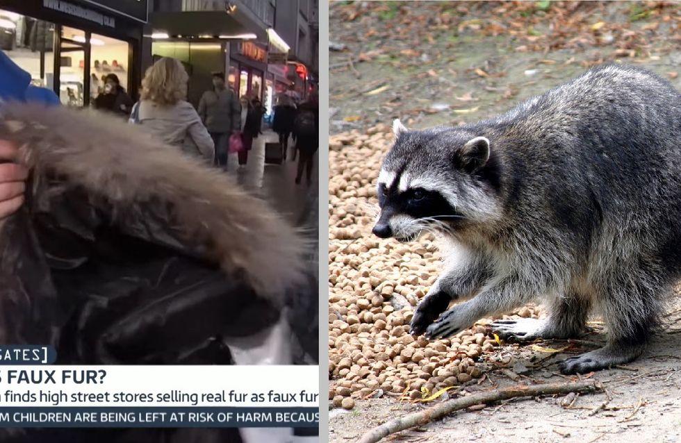 Forever 21 dupe ses consommateurs en faisant passer de la vraie fourrure animale pour de la fausse (Vidéo)
