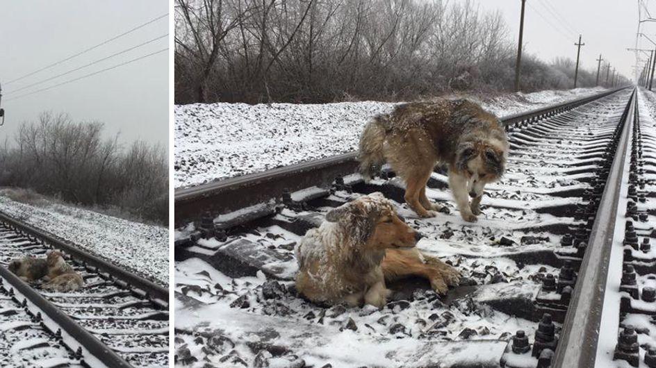 Unfassbar bewegend! Dieser Hund hat seine Freundin zwei Tage lang vor dem sicheren Tod bewahrt