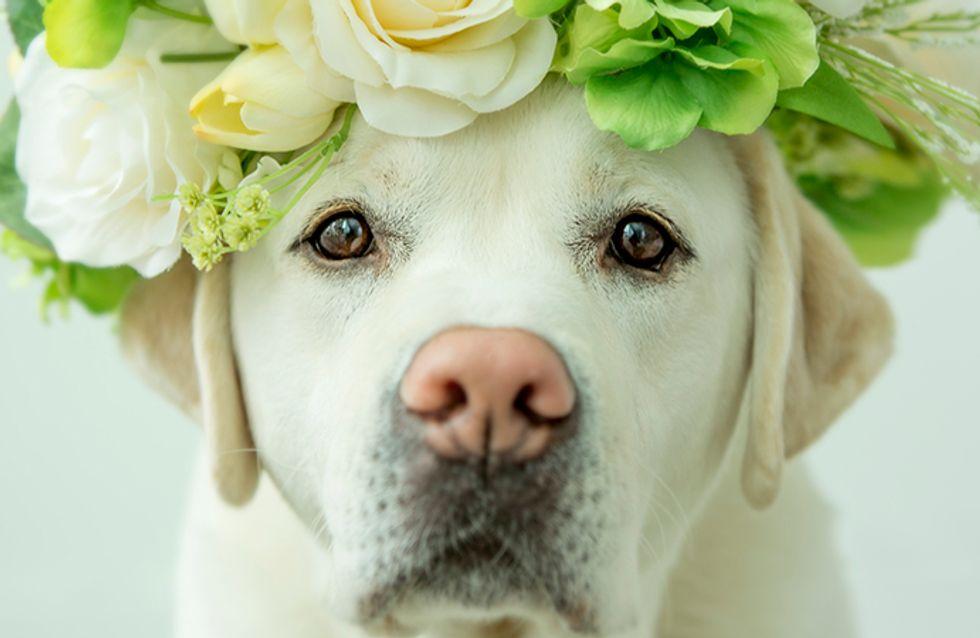 Quantas raças de cachorro você conhece?