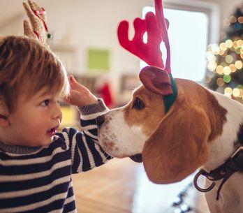Des idées de constructions pour Noël