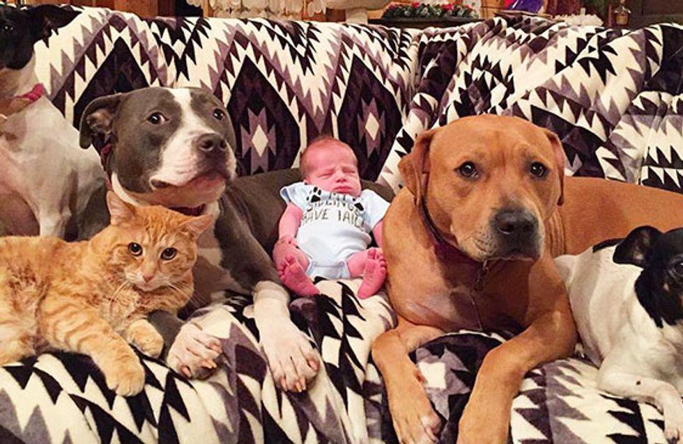 Esses pets estão obcecados pelo novo irmãozinho humano