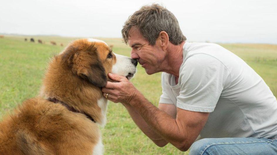 Geheime Videos aufgetaucht: Zeigen diese Aufnahmen Tierquälerei am Set eines Hollywoodsfilms?