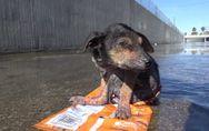 Erschütterndes Schicksal mit Happy End: Diesem Hund wurde ein neues Leben gesche