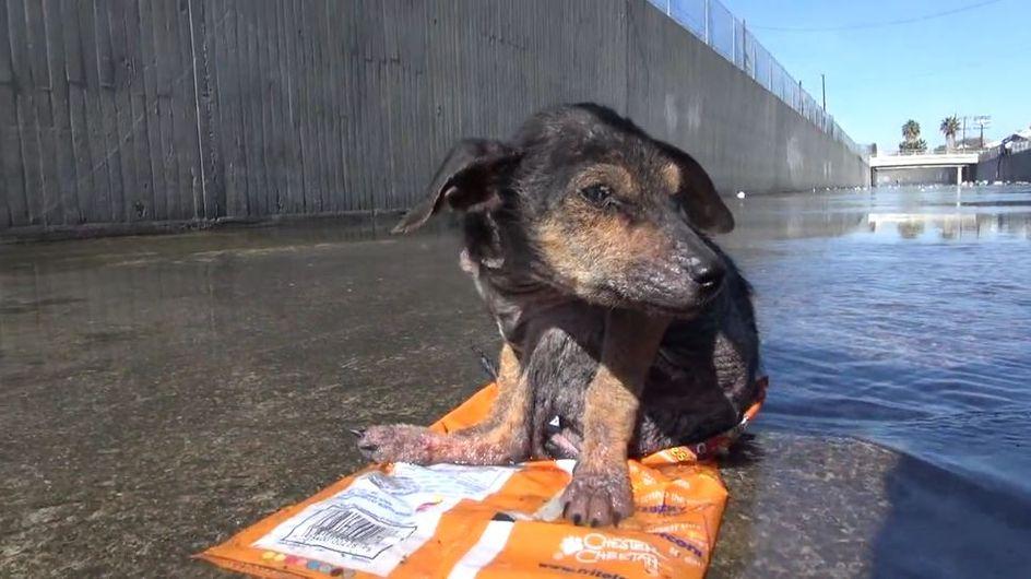 Erschütterndes Schicksal mit Happy End: Diesem Hund wurde ein neues Leben geschenkt
