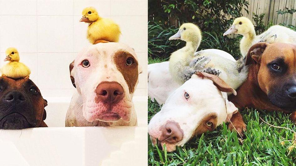 """Antes y después: 20 parejas """"imposibles"""" de mascotas que crecieron juntas"""