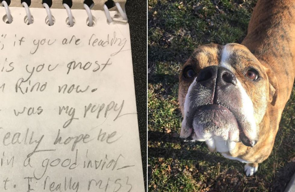 Dieser Hund wird im Tierheim abgegeben - zusammen mit einem Brief, der uns das Herz bricht