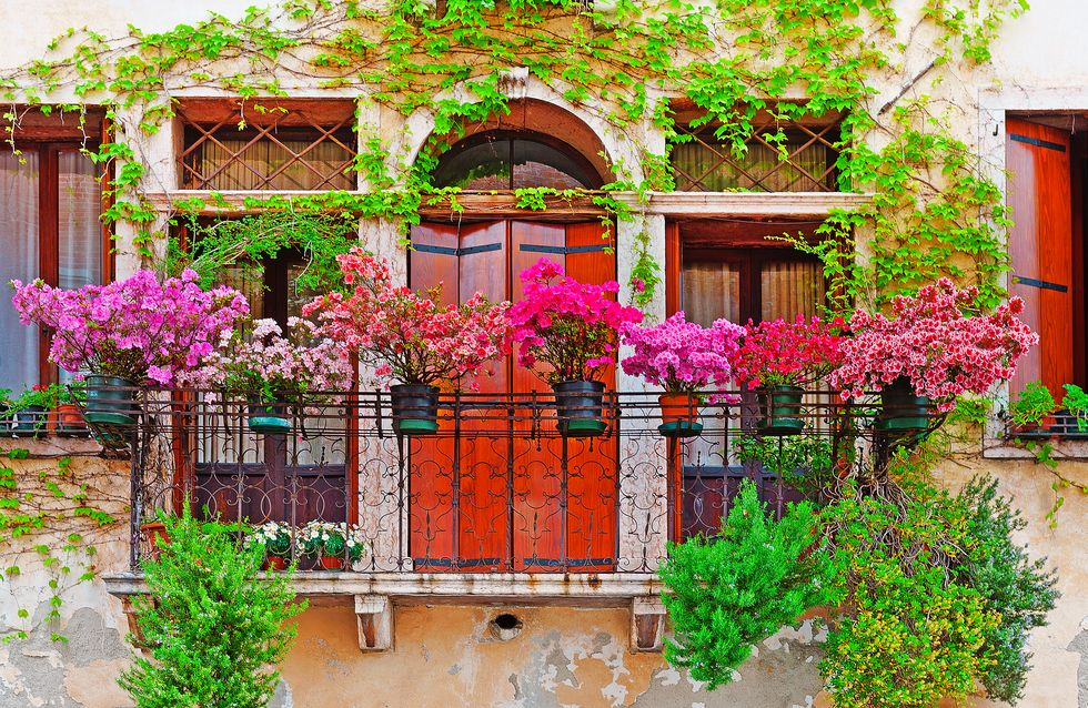 10 plantes tendance et faciles à entretenir pour décorer mon balcon