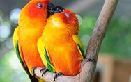 ¡Bésame mucho! 20 animales que muestran su amor comiéndose a besos