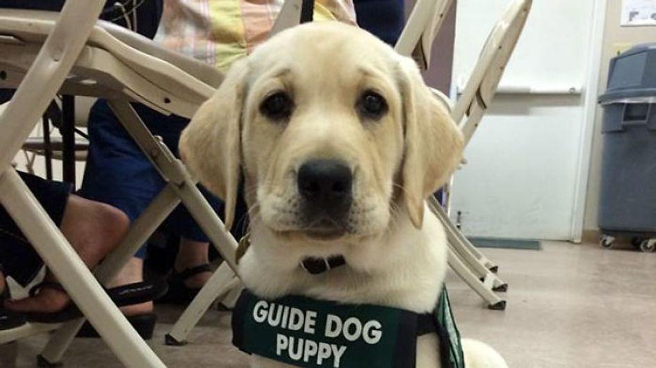 25 cachorros que se estrenan en su primer día de trabajo