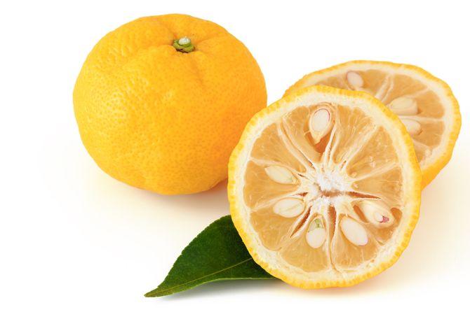 le yuzu, citron japonais