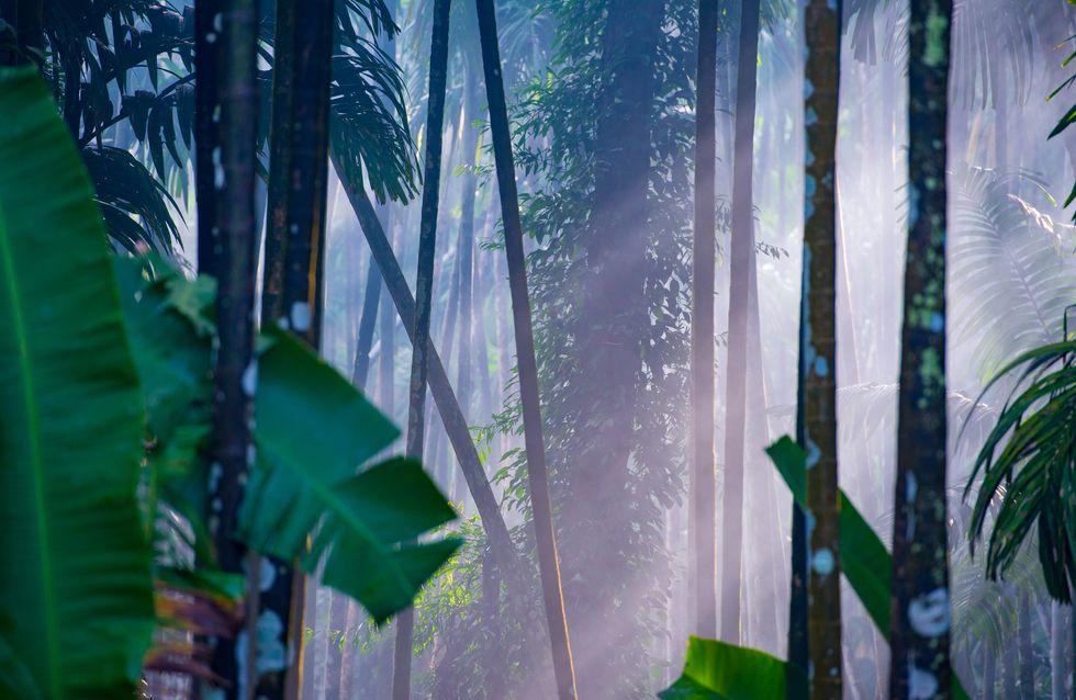"""En Inde, cette """"MowgliGirl"""" a été abandonnée dans la forêt parce qu'elle est une fille"""
